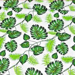 Zelené palmové listy na bílém podkladě