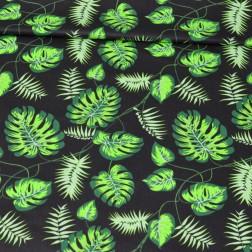 Zelené palmové listy na černém podkladě