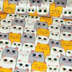Pomerančové kočky mezi šedými a bílými